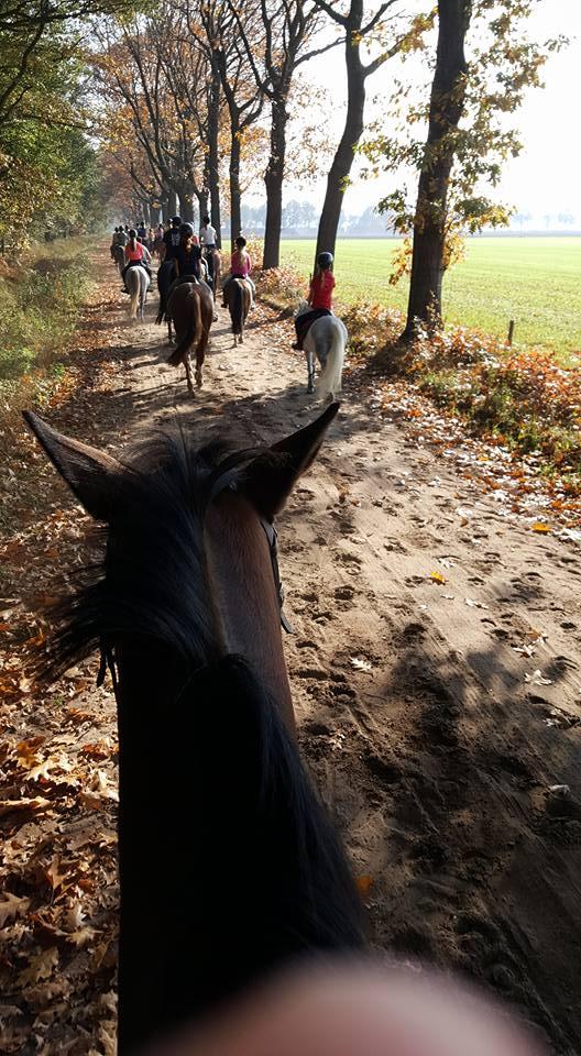 ponykamp1